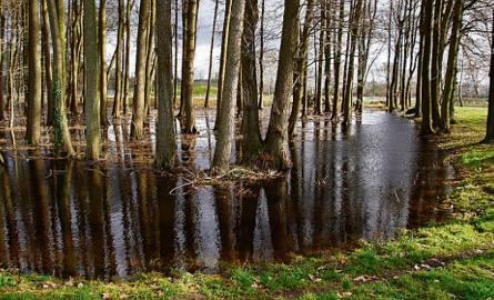 Zalany dawny ogród botaniczny w Sławnie. Podtopienia są także w parku miejskim i w rejonie rzeki Moszczenicy.