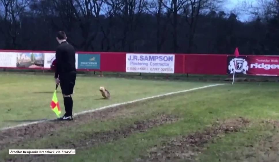 Film do artykułu: Pies przerwał mecz. Próbowali go złapać piłkarze obu zespołów [WIDEO]