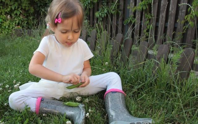 Зеленый душистый горошек - одно из лакомств малышей.  А в оторванном виде даже вкуснее.