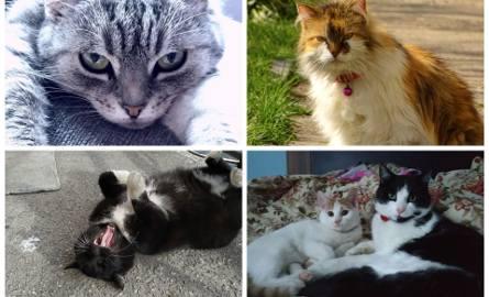 Dzień Kota 2020. Oto Wasze koty, kociaki, mrrruczki [zdjęcia Internautów]