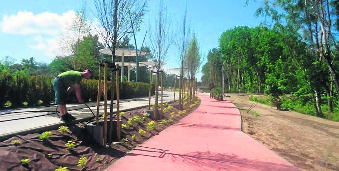Na ostateczny efekt trzeba jeszcze poczekać. Krzewy i drzewa muszą się zakorzenić i przyjąć, kwiaty niektóre zakwitną dopiero w kolejnych sezonach. Miasto