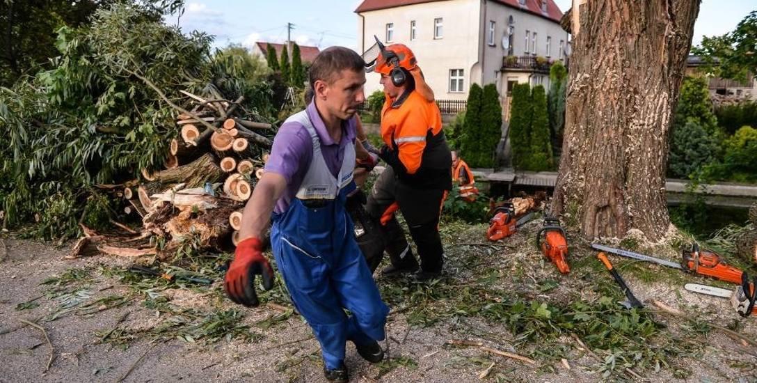 Jak oszacowano, samo uprzątnięcie drzew powalonych przez kataklizm, który w nocy z 11 na 12 sierpnia 2017 przeszedł przez województwo pomorskie, zajmie