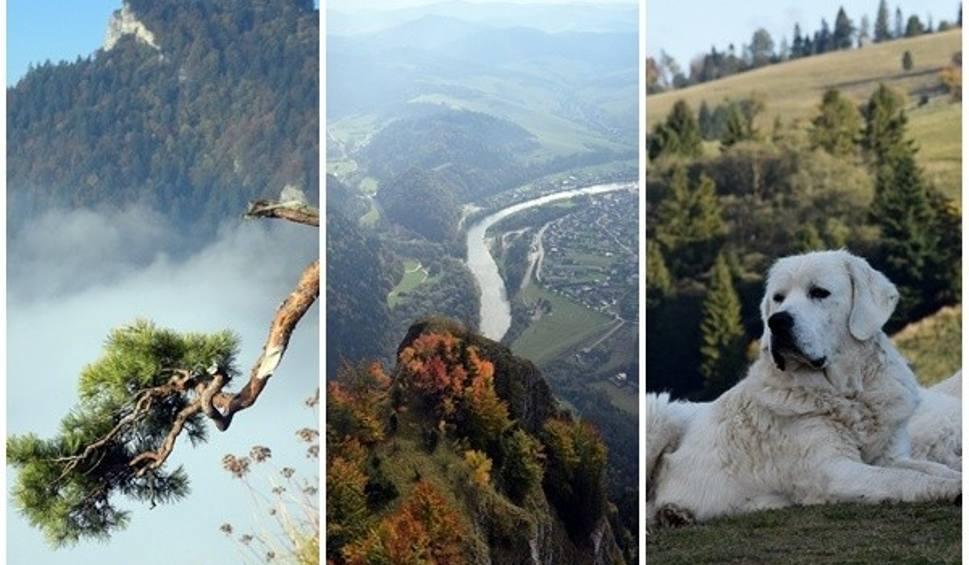 Film do artykułu: Jesienne góry we mgle. Piękne kolorowe Pieniny - Sokolica, Trzy Korony, Wysoki Wierch  (ZDJĘCIA, WIDEO)