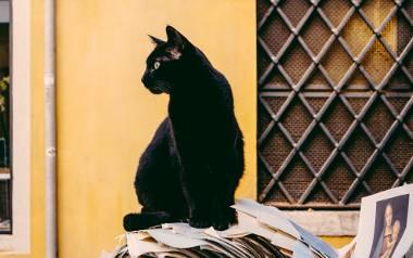 Ponad połowa Polaków wierzy w przesądy. Mamy nadzieję, że czarny kot nie przeszedł wam dziś drogi a widząc kominiarza złapaliście się za guzik. Zdecydowanie