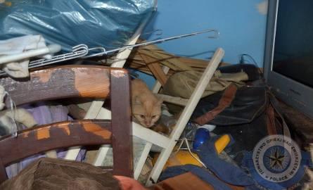 Wśród śmieci i odchodów, zaniedbane. Uratowali koty i psy