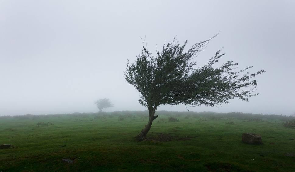 Film do artykułu: Uwaga na silny wiatr! W woj. lubelskim będzie mocno wiało
