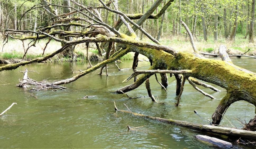Film do artykułu: O czym drzewo szumi… Zapraszamy na spacer po urokliwym Drawieńskim Parku Narodowym. Lasy Puszczy Drawskiej zachwycają!
