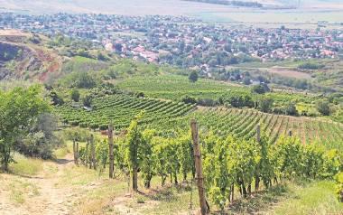 Tokaj i Eger - krainy winem płynące