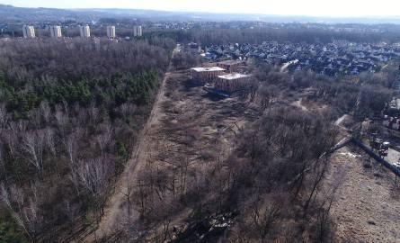 Wycięte drzewa w Lesie Borkowskim