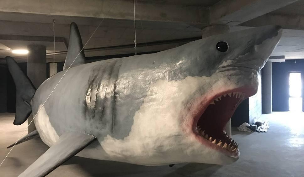 Film do artykułu: Żywe rekiny, wielkie płaszczki, ośmiornice i rafa koralowa. Wkrótce otwarcie Oceanarium w Międzyzdrojach [ZDJĘCIA, WIDEO]