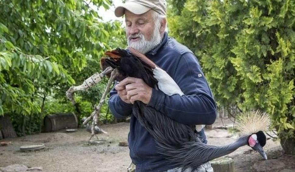 Film do artykułu: Słynny Ptasi Azyl będzie przeniesiony z Ostrowa do Złotej