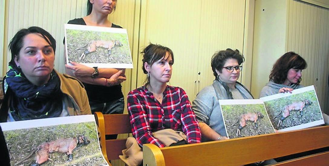 Początek procesu obserwowali obrońcy praw zwierząt. Przynieśli ze sobą zdjęcia skatowanej i skrępowanej Gai