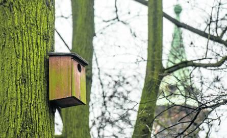 Budki dla ptaków to nie wszystko. Ptaki potrzebują różnorodnego zestawu roślin. A w ogrodach rządzą  tuje...