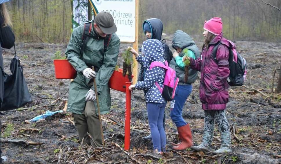 Film do artykułu: W Starachowicach posadzili drzewka. Deszcz nie odstraszył [ZDJĘCIA]