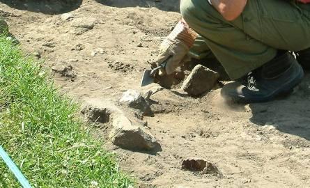 Archeolodzy wracają do Pełczysk