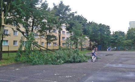 Na boisku między blokami na os. Zachód w Stargardzie, gdzie bawią się dzieci i młodzież, złamało się i spadło drzewo. Na szczęście nikomu nic się nie