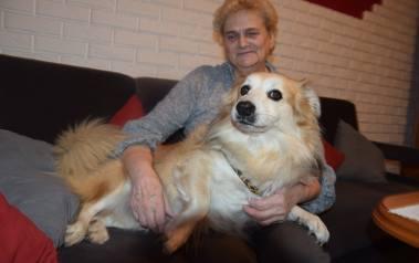 Morus lubi się wylegiwać na kanapie i być przytulany przez Wandę Boszko. Piesek jest zaczipowany.