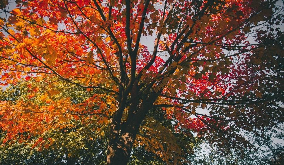 Film do artykułu: Jaka będzie pogoda w niedzielę, 21 października 2018 (21.10.2018) na Pomorzu i w całym kraju? [prognoza pogody]