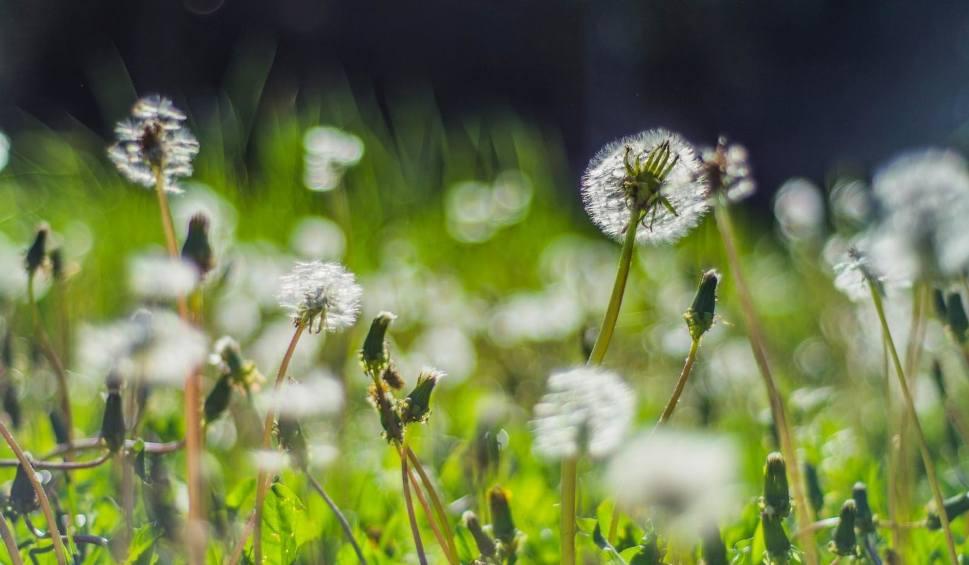 Film do artykułu: Jaka będzie pogoda w sobotę, 23 czerwca 2018 (23.06.2018)? Chłodno z odrobiną słońca [prognoza pogody, wideo]