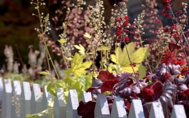 Ogród w stylu wiejskim polubi drewniany płot i rosnące przy nim wysokie kwiaty.