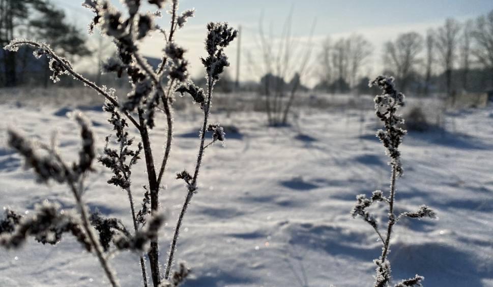 Film do artykułu: Zima 2021. Spacer po... zimowej łące. W słońcu wygląda przepięknie. Zobaczcie sami. Zdjęcia