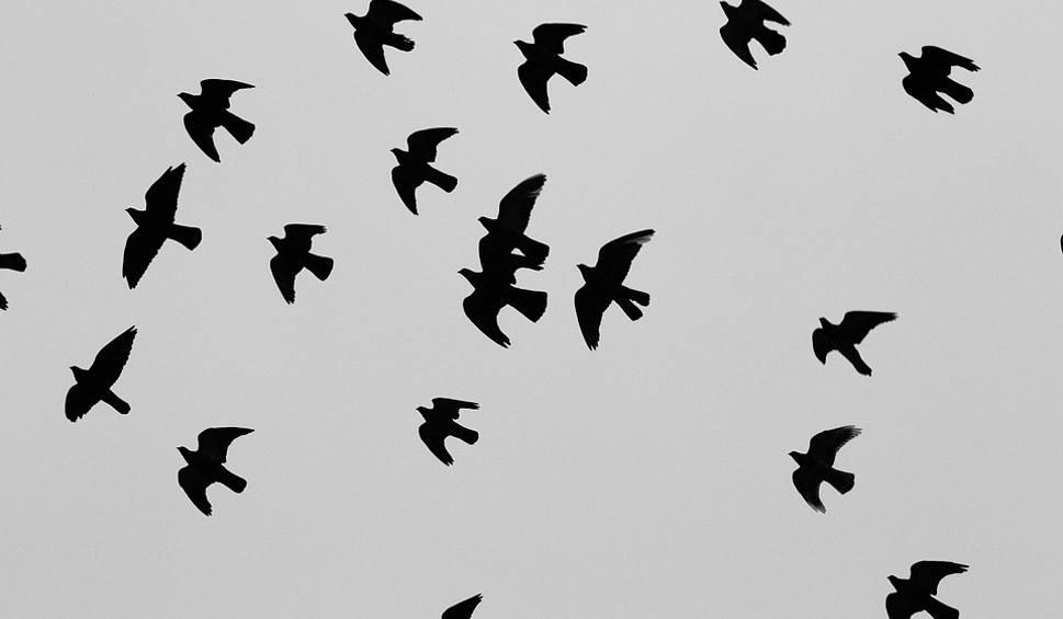 Film do artykułu: Sposoby ma gołębie. Jak można usunąć gołębie z balkonu? Gołębie są pod ochroną? Można usunąć gniazda gołębi? 16.04.2021