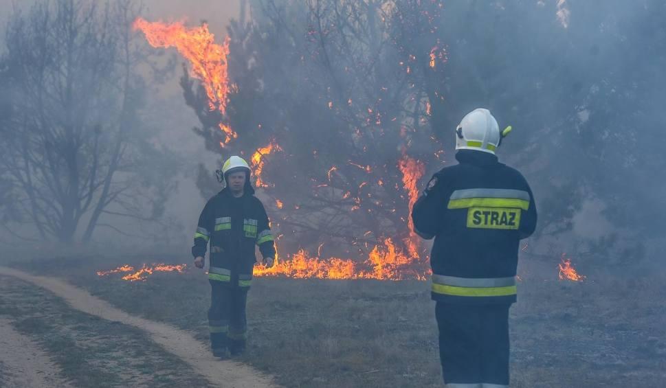 Film do artykułu: Zagrożenie pożarowe II i III stopnia w lubuskich lasach. Leśnicy apelują o ostrożność