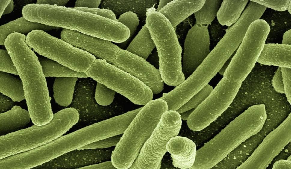 Film do artykułu: U trzech pacjentów Klinicznego Szpitala Wojewódzkiego nr 2 w Rzeszowie, w tym u 14-latki, wykryto groźną bakterię New Delhi!