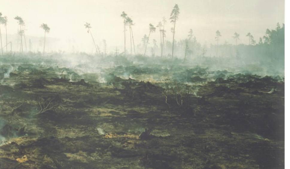 Film do artykułu: 25 lat po pożarze lasu w Kuźni Raciborskiej PROGRAM UROCZYSTOŚCI 18.8.2017