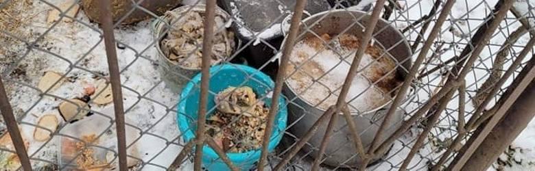 W Złotniku, koło Żar pies żył w makabrycznych warunkach. Zamarznięte pomyje w garnku i dziurawa buda, a na dworze minus 15 stopni