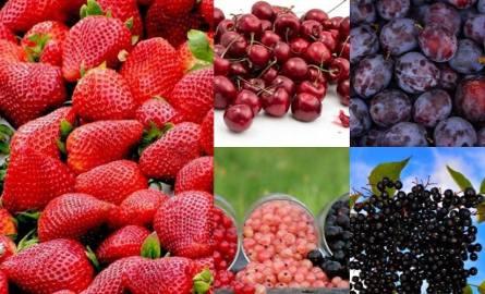 Strefa Agro. Ceny owoców w skupie. Mocne słowa o sprawie pracy w komisjach szacujących szkody