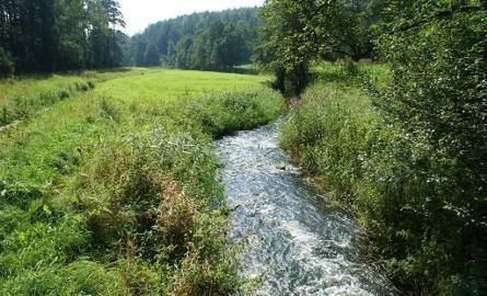 Malownicza dolina rzeki Kulawy poprzecinana jest XIX-wiecznym systemem nawodnień tutejszych łąk.