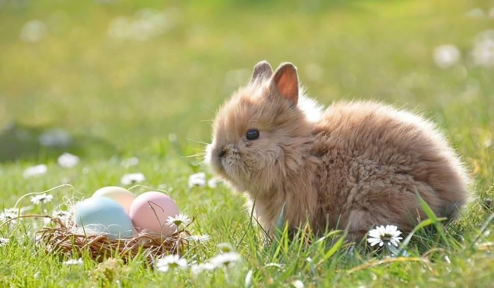 Film do artykułu: Życzenia na Wielkanoc 2019. Wierszyki - śmieszne, krótkie, wielkanocne życzenia SMS