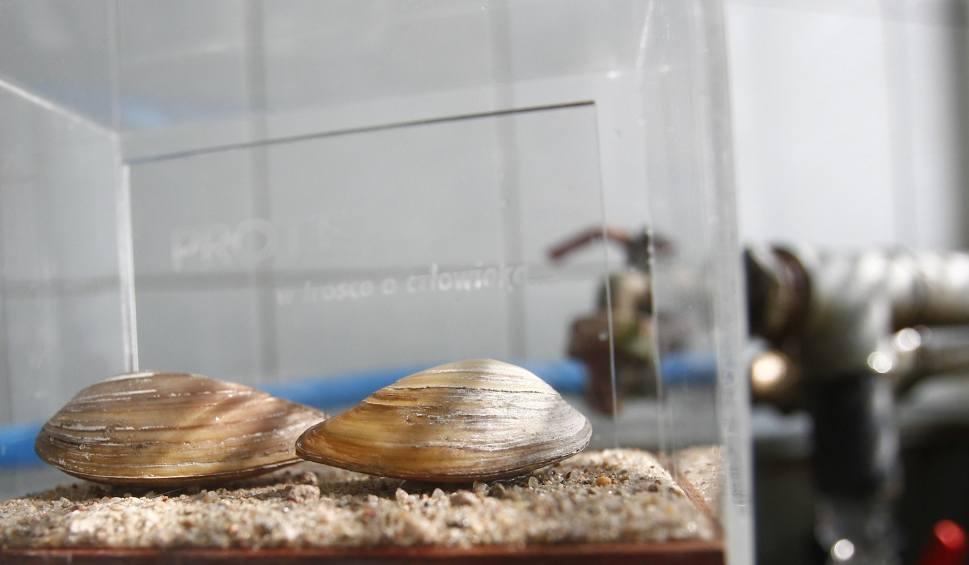 Film do artykułu: Małże strzegą jakości wody dla mieszkańców Rzeszowa [WIDEO]