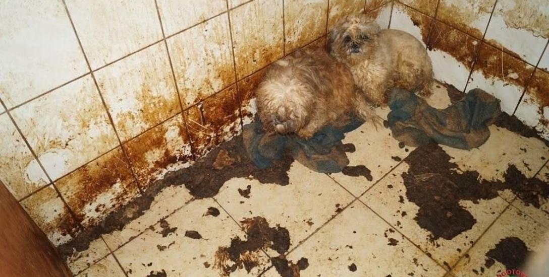 """""""Psy miały się dobrze"""". Umierały w mękach w Dobrczu"""