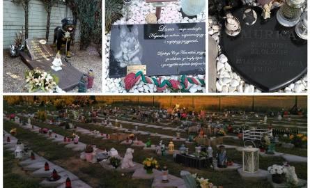 Groby zwierząt na cmentarzu niedaleko Białegostoku
