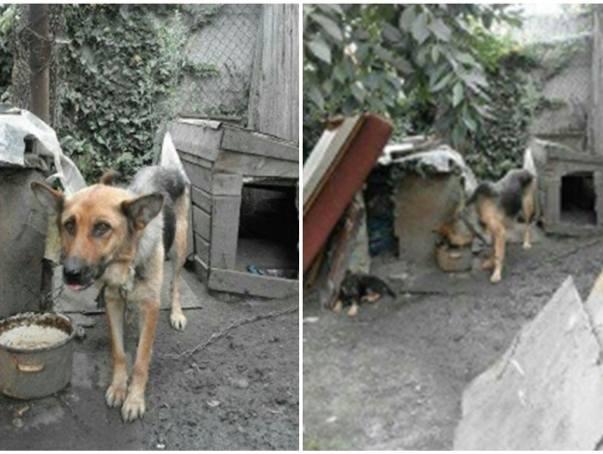Zabili psy ze szczególnym okrucieństwem w Dobrzyniu nad Wisłą. Rusza proces