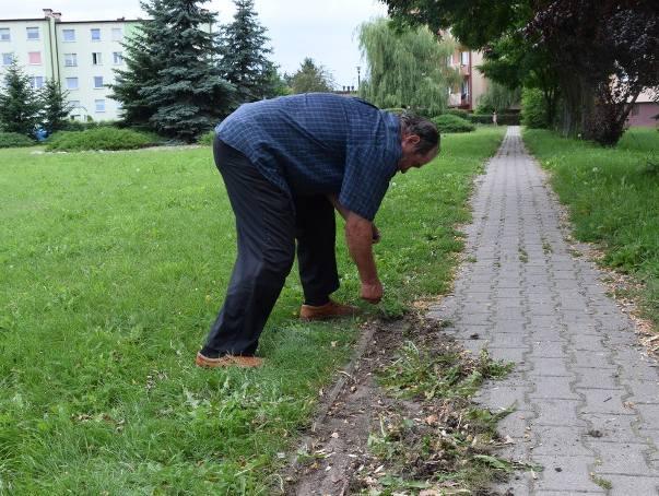 Eugeniusz Hafke wywiązuje się z pracy rewelacyjnie. Oczyszczenie ścieżki z trawy to syzyfowa praca, ale nie narzeka.