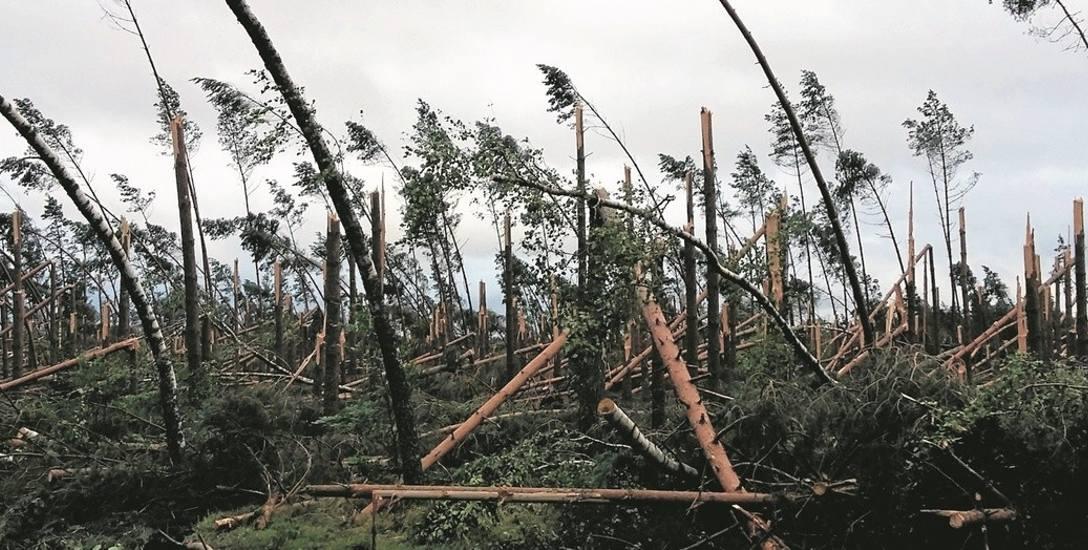 Tak wygląda krajobraz po kataklizmie, jaki w piątek po godz. 22 spustoszył Bory Tucholskie. Powalone lasy można zobaczyć nie tylko w powiecie chojnickim,
