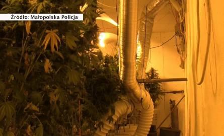 Policja zlikwidowała mobilną fabrykę marihuany w naczepie tira. Zatrzymano trzech mężczyzn