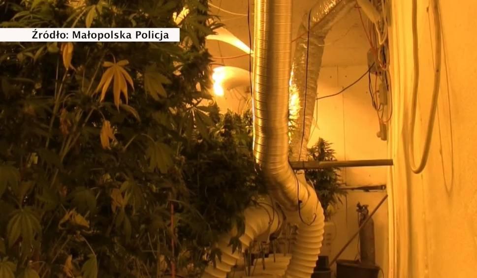 Film do artykułu: Policja zlikwidowała mobilną fabrykę marihuany w naczepie tira. Zatrzymano trzech mężczyzn