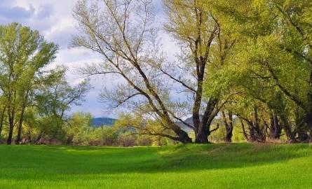 Rolnik może bez pozwolenia ściąć drzewo prywatnie, służbowo już nie