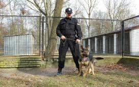 Cudowna Psy policyjne w Łodzi: owczarki rozpoczynają szkolenie IZ35