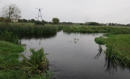 Skrzyżowanie rzek Nielby i Wełny, zwane bifurkacją