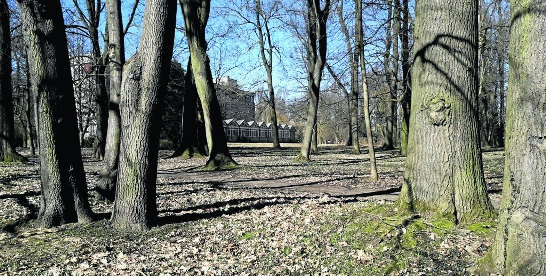 Dzięki inwestycji współfinansowanej z funduszy unijnych zaniedbana część Parku Tadeusza Kościuszki w rejonie Koszalińskiej Biblioteki Publicznej wyp
