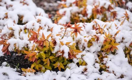 Kiedy spadnie pierwszy śnieg i kiedy chwyci mróz? Zobacz, jaka czeka nas pogoda [PROGNOZA POGODY]