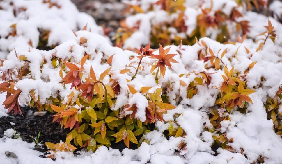 Film do artykułu: Kiedy spadnie pierwszy śnieg i kiedy chwyci mróz? Zobacz, jaka czeka nas pogoda [PROGNOZA POGODY]