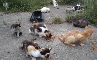 Ryczywół: Chciał pomóc kotom. Miał ich 70