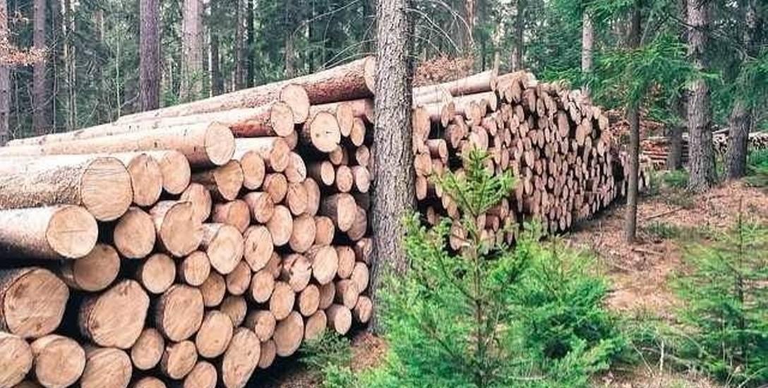 Nadleśnictwo skontrolowało drewno u leśniczego L.O. Inwentaryzacja nie wypadła pomyślnie...