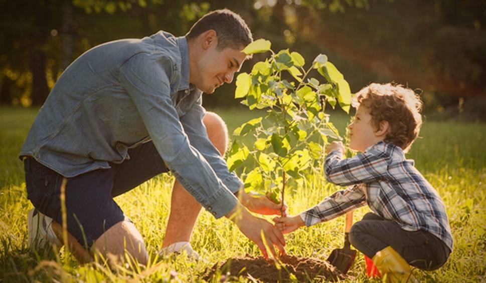 Film do artykułu: W piątek leśnicy rozdadzą tysiące darmowych sadzonek drzew. Zobacz, gdzie możesz je odebrać